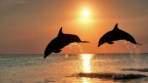 【春节特卖】澳大利亚、新西兰、海豚岛12日
