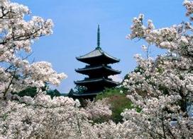 【日本】东京、箱根、大阪、京都、奈良7日(4~5星纯玩 2天自由活动)