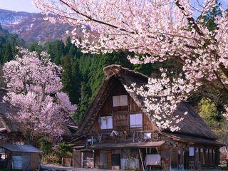 【日本本州】传统本州7日游 双古都 带白川乡