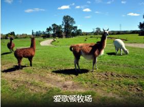 【五星澳新】玩美澳大利亚 新西兰 5星12日