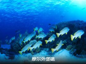 <澳新凯>澳大利亚·新西兰·凯恩斯12日精华游 国航直飞  邂逅绿岛大堡礁
